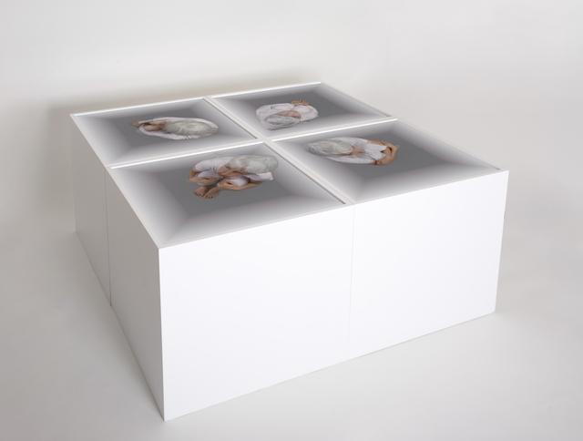 , 'Convergence,' 2009, Winston Wächter Fine Art