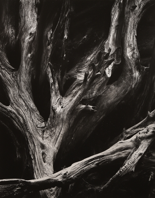 , 'Sequoia Roots,' ca. 1950, Seagrave Gallery