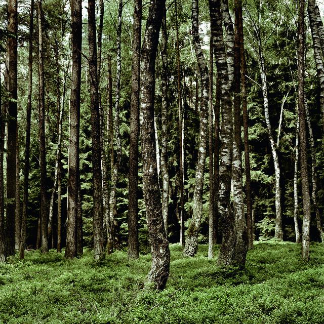 , 'D Weissenhorn 01,' 2008, Bernheimer Fine Art