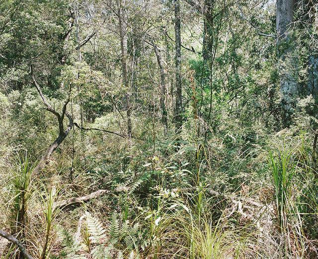 , 'Bush Landscape #2,' 2016, OLSEN GALLERY