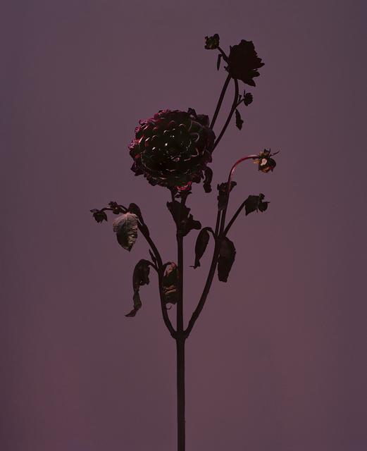 , 'fig. XXVIII,' 2017, Galerie SOON