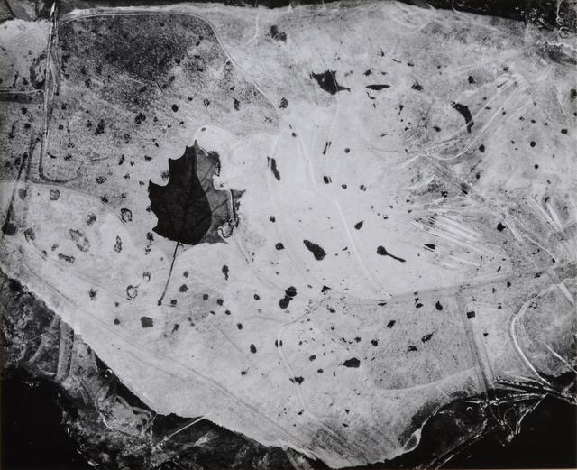 , 'Leaf in Ice, Nahant, Mass,' 1958, Scheinbaum & Russek Ltd.