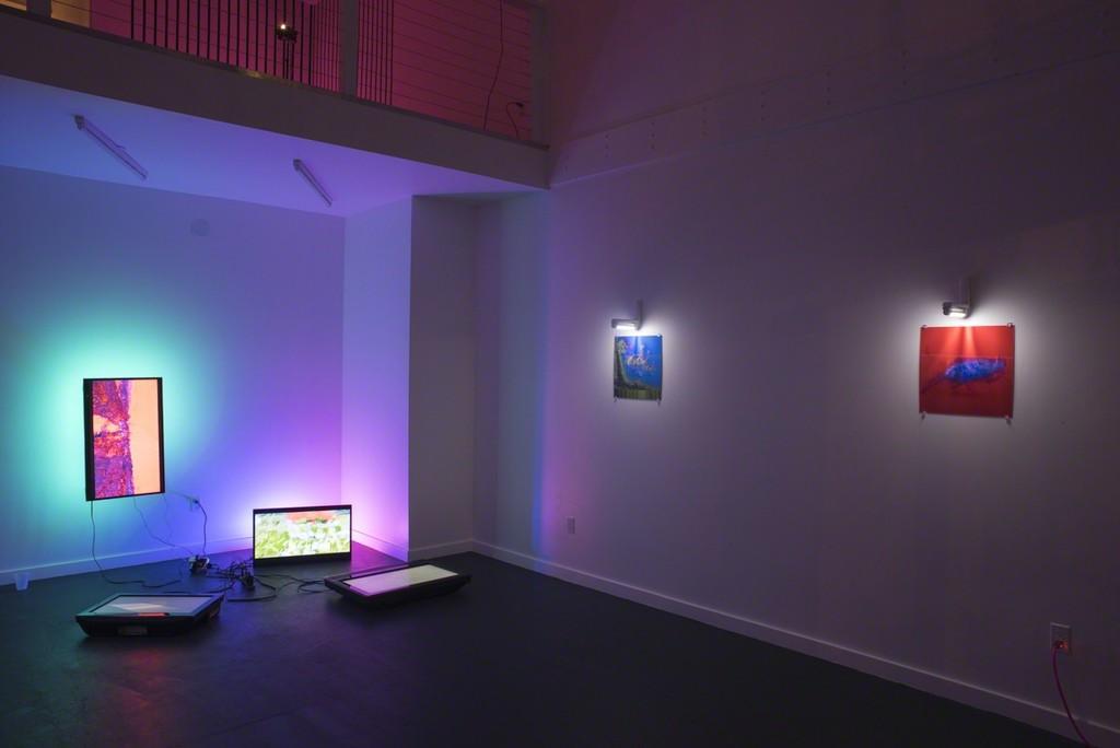 Paula Morales, installation view, 2017
