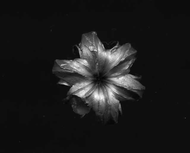 Emmanuel Van der Auwera, 'Nine Florida Stories', 2020, Photography, C-Prints, Harlan Levey Projects