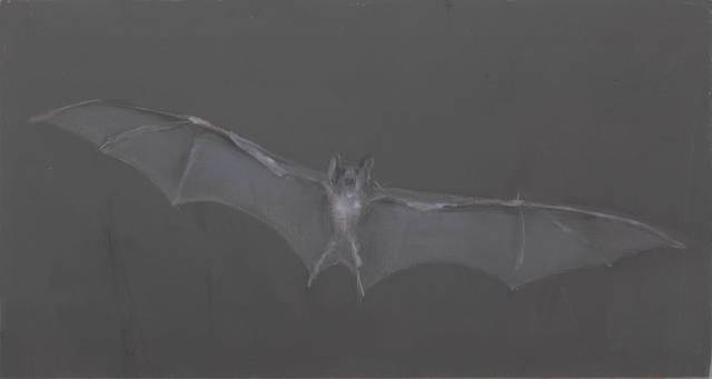 , 'Untitled (Bat),' 2016, Jeanne Bucher Jaeger