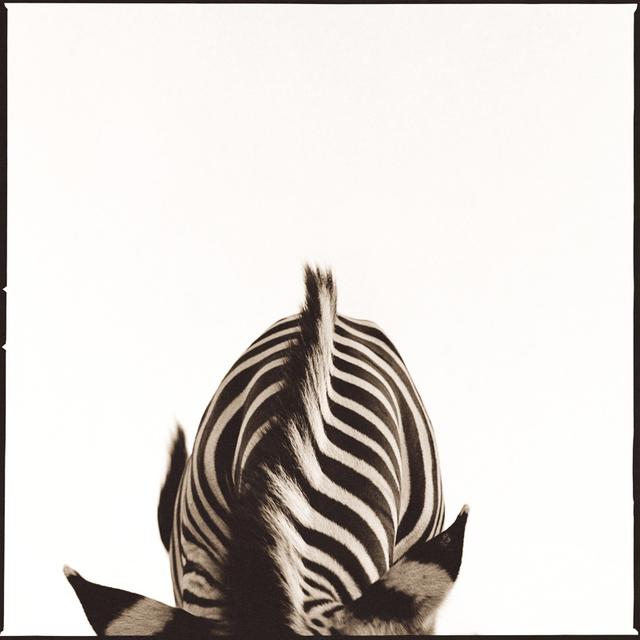 Nine Francois, 'Zebra II', Weston Gallery
