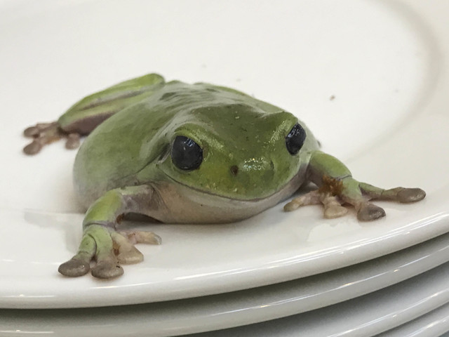 Juergen Teller, 'Frogs and Plate No. 1, London', 2004, Suzanne Tarasieve