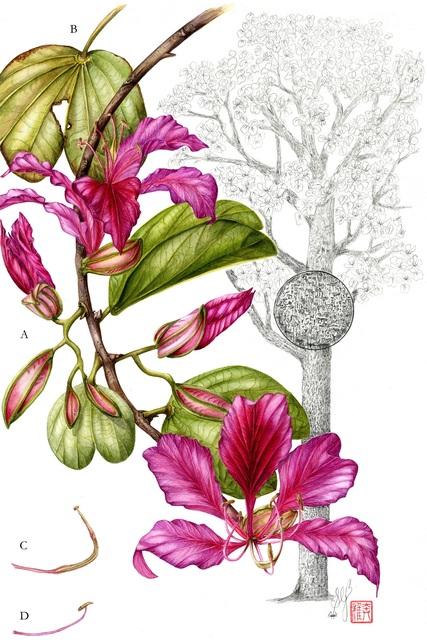 , 'Bauhinia blakeana,' 2012-2018, Asia Society Hong Kong