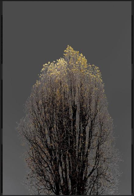 Arman, 'N°22, Dark Trees series (Ed. 2/4 + 1 AP)', 2018, Elga Wimmer PCC