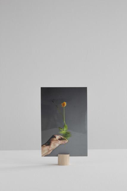 , 'Herbarium Rotarium 3&4,' 2016, Machado - Muñoz