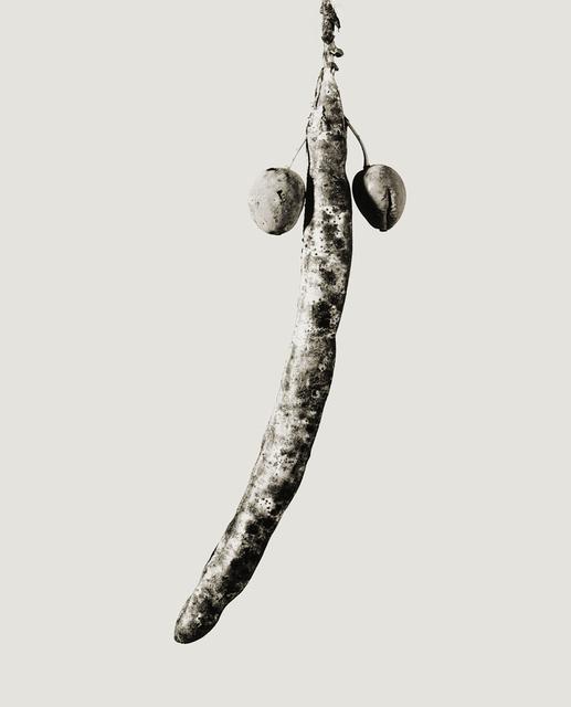 , 'Astropithus dicotiledoneus,' 1984, Galleria del Cembalo