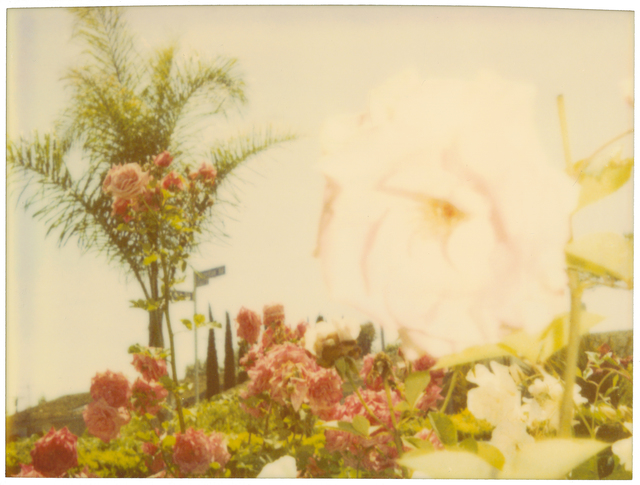 , 'Pink Rose,' 2004, Instantdreams