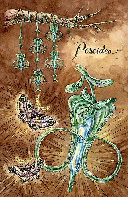 , 'Piscidea,' 2015, Helikon Gallery & Studios