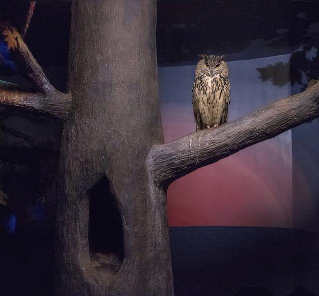 , 'Owl and Darkness,' 2015, Galerie Dumonteil
