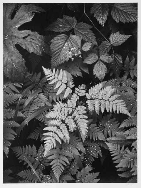 , 'Leaves, Mt. Rainier, Washington,' 1942, Photography West Gallery