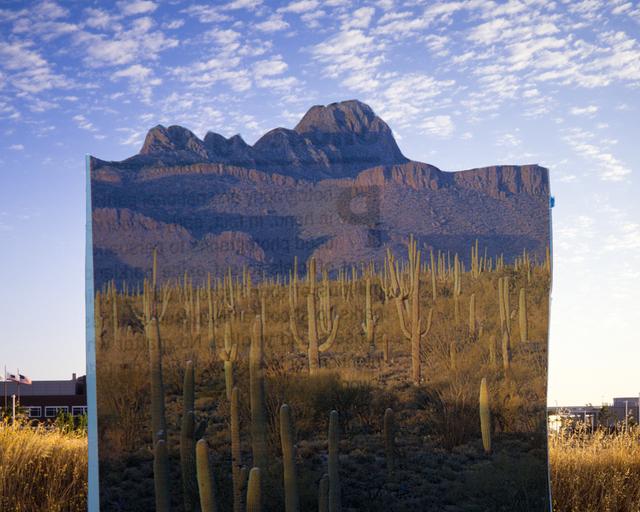 , 'Saguaros,' 2015, Ro2 Art