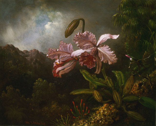 , 'Orchids in a Jungle,' 1871-1874, Philadelphia Museum of Art