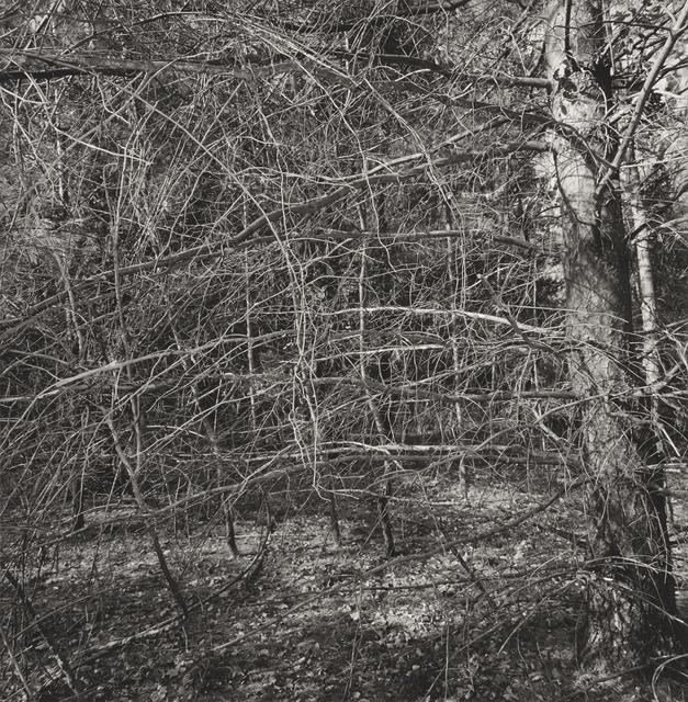 , 'Nyack,' 2000, Pace/MacGill Gallery