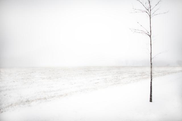 Jack Spencer, 'Snow Tree ', 2019, David Lusk Gallery