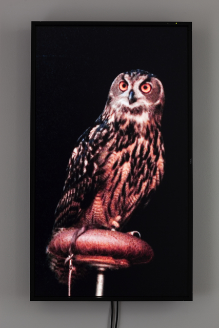 , 'Male Eurasian Eagle Owl (Big Bird),' 2012, 1301PE