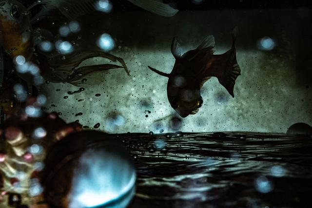 Ergys Zhabjaku, 'Fish Tank', 2019, Gallery70 Contemporary Art