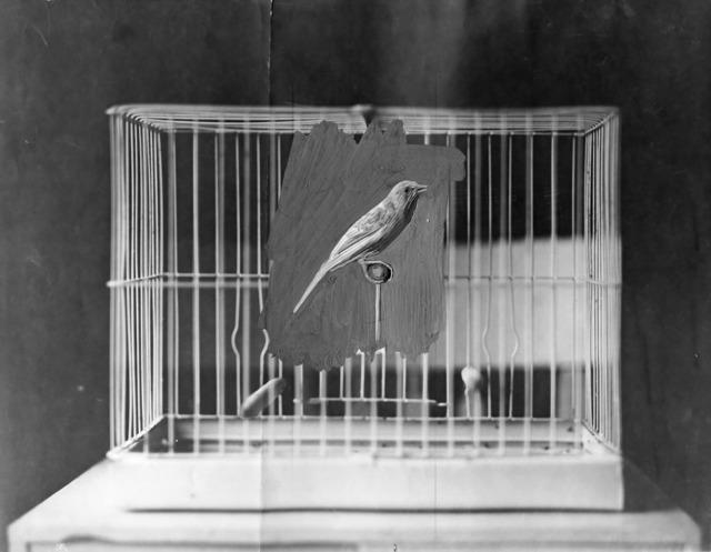 , 'Bird Cage,' 2017, SCAG
