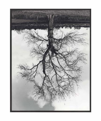 Rodney Graham, 'Welsh Oaks (#4)', Christie's