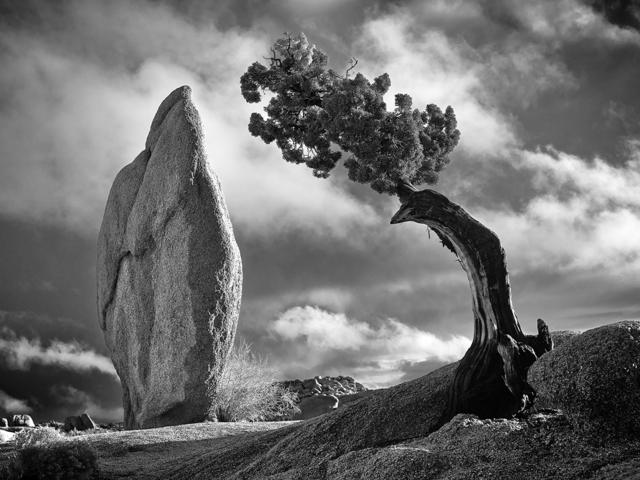 , 'Humility,' 2016, Joshua Tree Art Gallery