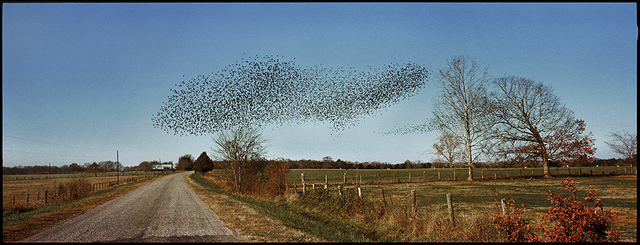 , 'Birds, Perry County, AL,' 2002, Spalding Nix Fine Art