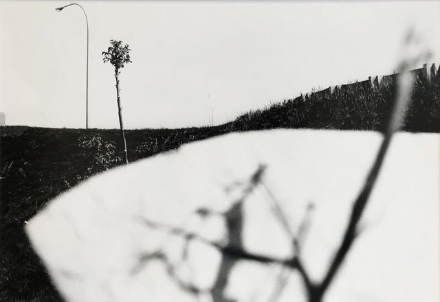 , 'Pictus Interruptus,' 1977, Charles A. Hartman Fine Art