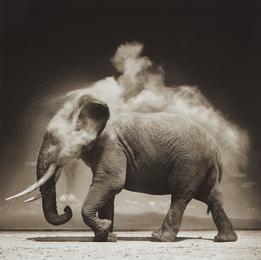 Elephant with Exploding Dust, Amboseli