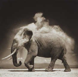 Nick Brandt, 'Elephant with Exploding Dust, Amboseli,' 2004, Phillips: Photographs (April 2017)