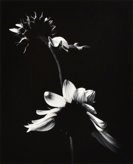 , 'Sunflowers,' 1974, Scheinbaum & Russek Ltd.