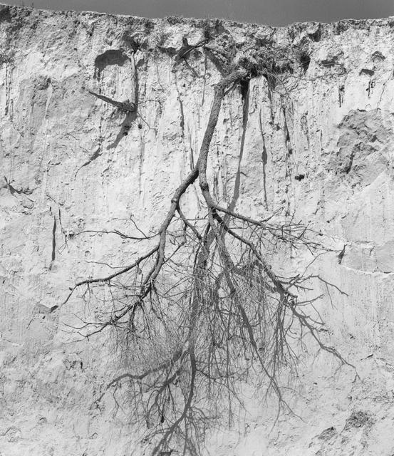 , '倒挂的树 Upside Down Tree,' 2016, C14 Gallery