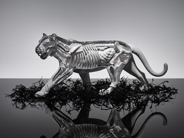 , 'TIGER,' 2015, Ricardo Reyes