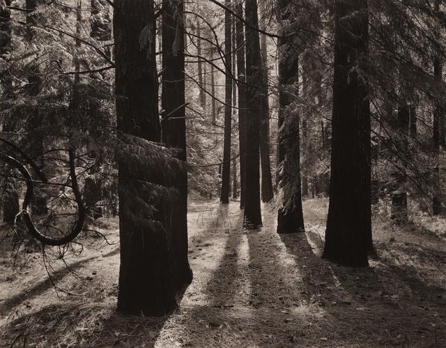 , 'Forest Floor, Yosemite,' ca. 1950, Seagrave Gallery