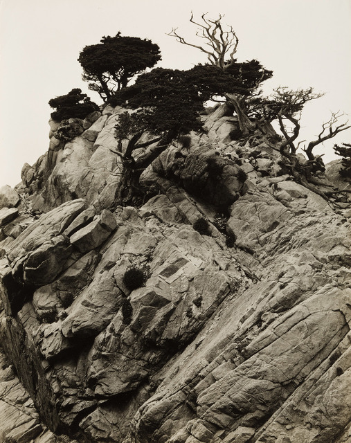 , 'Point Lobos, Calif.,' 1939, Tang Teaching Museum and Art Gallery