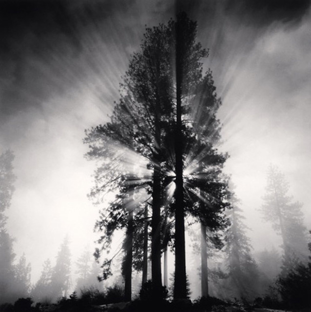 , 'Avenue of the Giants, California, USA,' 1998, Dolby Chadwick Gallery