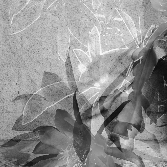 , 'Night Blooms,' 2016, DENK Gallery