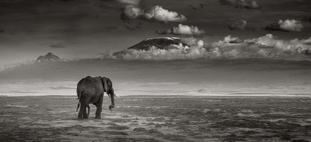 , 'Big bull walking,' Kenya 2017, Immagis Fine Art Photography