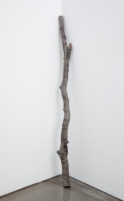 , 'Weeping Birch Stem,' 2010, carlier | gebauer