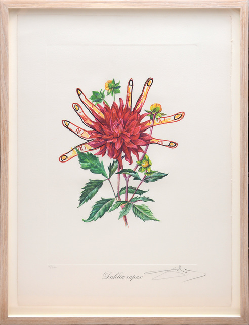 Salvador Dalí, 'Dahlia rapax (Dahlias of Dalí)(From Surrealist Flowers Portfolio)', 1972, Print, Heliogravure and embossing on heavy Arches paper, artrepublic