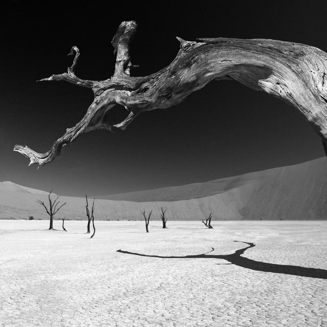, 'Dead Vlei IV - Namibia,' , Atlas Gallery