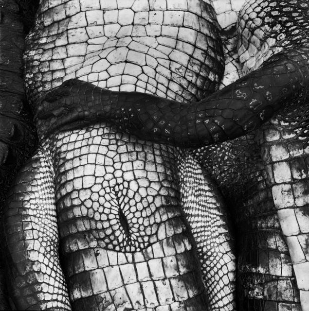, 'Gator Paw,' 1995, Gitterman Gallery