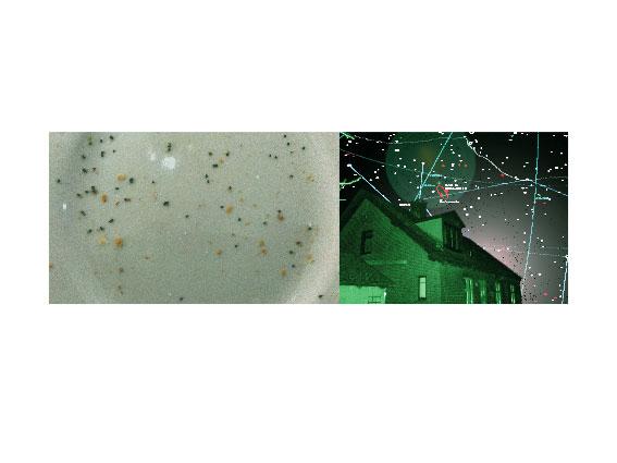 , 'Dust,' 2013, SHIM Art Network