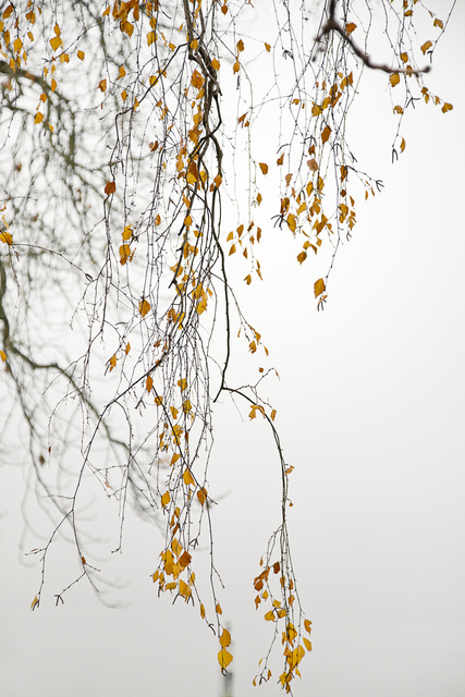 Laurie Lambrecht, 'Lake Trees 11', 2006, Etherton Gallery
