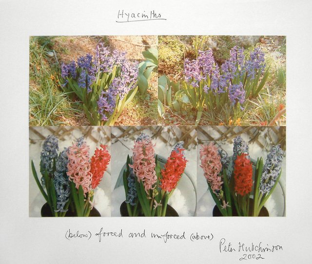 , 'Hyacinths,' 2002, The Mayor Gallery