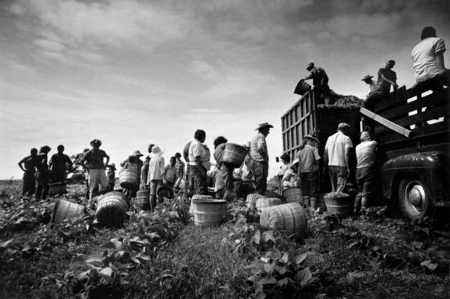 , 'Mirant Bean Pickers, Arkansas, 1961,' , Monroe Gallery of Photography