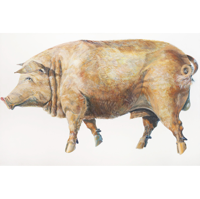 , 'Pig,' 1969, Allan Stone Projects