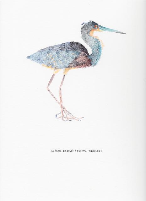 , 'Garceta Tricolor (Egretta Tricolor),' 2017, Nueveochenta